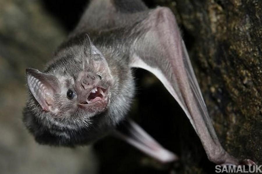 Необычные факты о летучих мышах